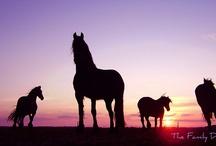 Paarden♡