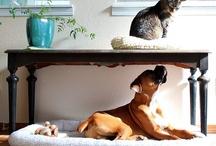 Animals / by Emma Lee