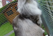 Lucy and other maine coon's