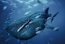 Ocean Life / by Signe Blum