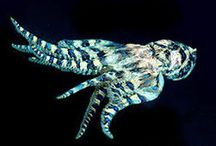 Venomous animals / by Courtney Patterson
