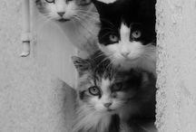 Cats*