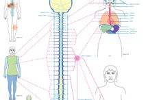 szinergiaterapia