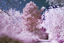Pink trees and flowers
