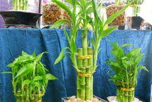 Plantas para interior