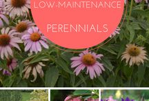 Gardens Low Maintenance / Low maintenance is a good thing...they'll be energy left for other fun stuff. Wish I had family in this category.