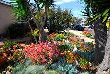 Waterwise California Garden / by Ann Biedenweg