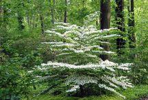 Woodland Garden / Understory plants