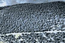 national parks between denver and austin / by Brooke Trexler