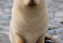 focas pequeñas