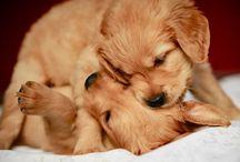 Pawsome Puppies