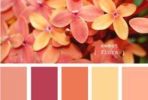 Paleta de colores pa