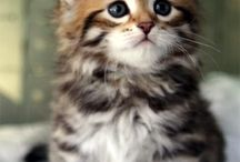 because cats! / I love cats.