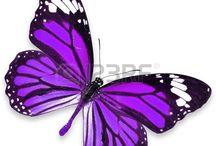 kelebekler2