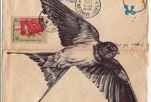 Pássaros e corujas