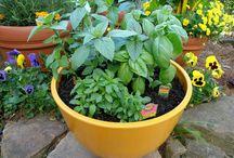 All About Herbs / by National Garden Bureau