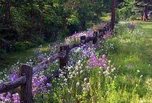 Flowers - Lavender & Purple