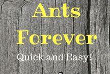 Anti Ants