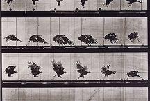 Рисунок и фото птиц. Picture of birds.