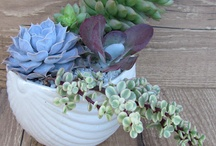 Succulents Galore & Container Plants  / Succulents, Cacti, Container Gardening, & More simplistic plantings for inside or out.  / by Wendy Brooks  @MissionsRN
