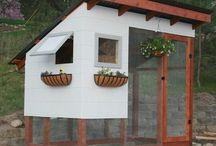 Backyard Chickens & Coops / by Senta Jenkins