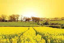 Pure Mustard Oil India