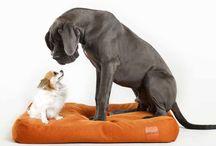 - OBJETS TENDANCE POUR ANIMAUX - / Et si on chouchoutait notre animal de compagnie ! Douceur, design, et bien être voici notre sélection.