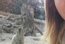 animali my love jack russel top! / piccolo suricate suricati adorabile