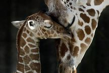 Oh How I LOVE Animals