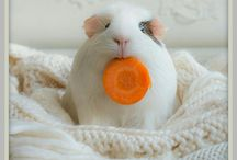 When You Need a Smile...Guinea Pigs!! / by Casey Hanson
