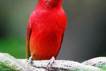 """BIRDS"" / by Everett Faulkner"