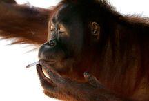 курить вредно