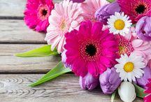 Parfumuri Florale / Parfumuri pe baza de ingrediente florale din intreaga lume.