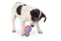Pet Products We Love