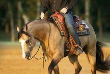 Cavalli vi amoooo