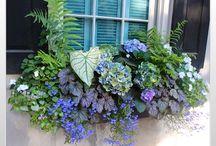 Charleston Window Boxes / by Sanna Davis