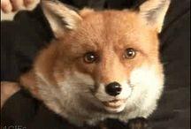 luanna perez and fox gif