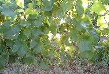 Oregon Food & Wine