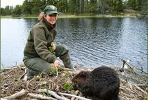 Science & Research / by Voyageurs National Park Association