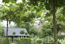 Garden/Robert Broekema