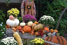 wheelbarrow with pumpkins for fall .