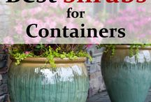 Best Shrubs for containers
