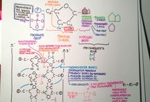 Notes Biology&Chemistry