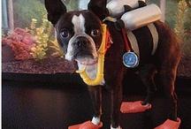 Deniz Dostları / Wet Pets