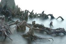 RoaLD - Forgotten Marshes
