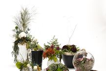 MOSSMANIA Flower Design / Preserved Flower Arrangements. Everlasting flowers which never go out of style. The beauty of nature that lasts forever.