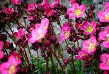 Gardening and Flowers / Bloeiende planten in de tuin van Goosloo