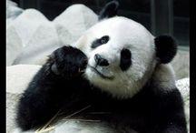 #World Of Panda