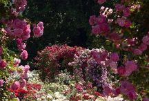bloemen / by Fabienne