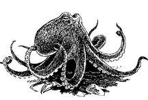 Octopi! / by Jimbob Fizzlepickle
